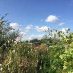 Chesterfield Allotments